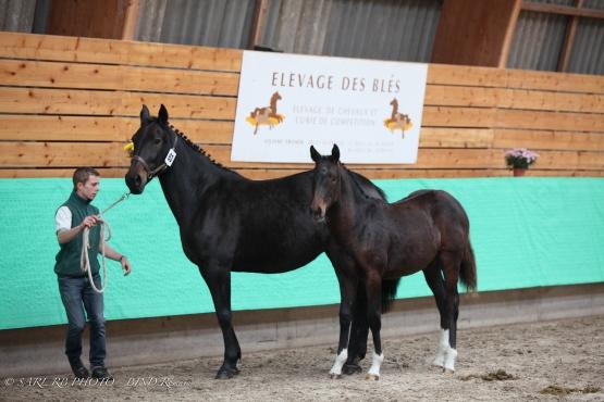 RESULTATE DES FOHLEN-TURNIERES 2011