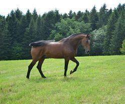 IMPERATOR DE GAMET ist im Pferdeparadis