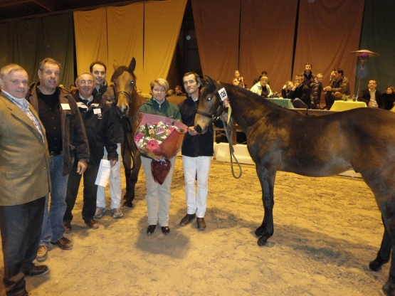 CONCOURS DES FOALS SAMEDI 03 NOVEMBRE 2012