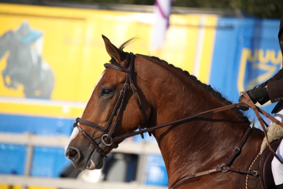 BENJAMIN ROBERT AVEC QUITAKA FZ ET ROBINSON DES FORETS A DINARD LE 17.05 AU 20.05.2012